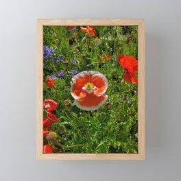 The Red & White Poppy Framed Mini Art Print