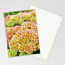 At Hyde Park Stationery Cards
