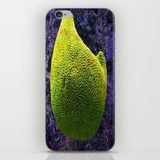 Lime green sea creature iPhone & iPod Skin