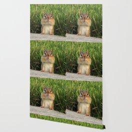 Peek A Boo!! Wallpaper