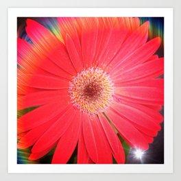 Rainbow Gerbera Art Print