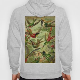 HUMMINGBIRD COLLAGE- Ernst Haeckel Hoody