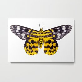 butterfly moth Dysphania subrepleta isolated Metal Print
