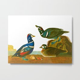 Harlequin Duck Metal Print