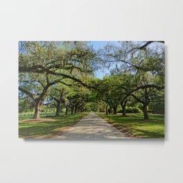 The Avenue of Oaks Metal Print