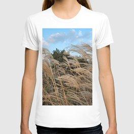Silver grass of Coastal roadside , Jeju Island, Korea.  T-shirt