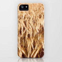 golden cereal grain ears on field iPhone Case