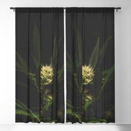 Healing Cannabis Blackout Curtain