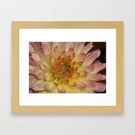 Dahlia 091019 Framed Art Print