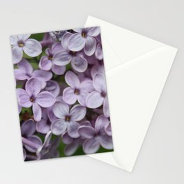 Close Up Of Persian Lilac Blossom Stationery Cards