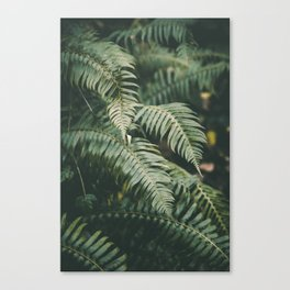 Ferns V Canvas Print