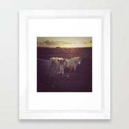 Wild Horses at Sunset Framed Art Print