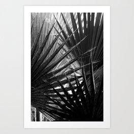 Tropical Darkroom #169 Art Print