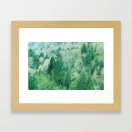 Northern California Pine Trees Framed Art Print