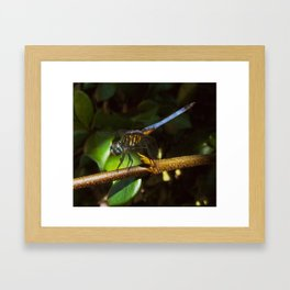 The neon blue dragonfly Framed Art Print
