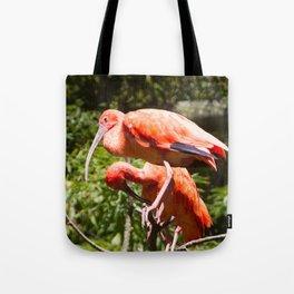Eudocimus Ruber Tote Bag