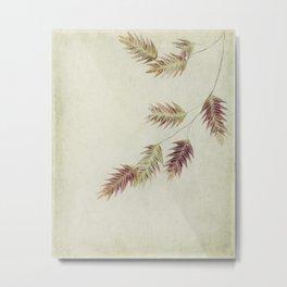 oat grass leaves Metal Print