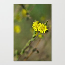 Golden flowers by the lake 3 Canvas Print