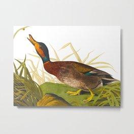 Bemaculated Duck Metal Print