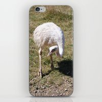 ostrich iPhone & iPod Skins featuring Ostrich by Sarah Shanely Photography