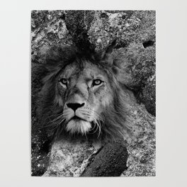 The Fearless Lion Poster