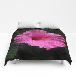 Hibiscus at Eden Project Comforters