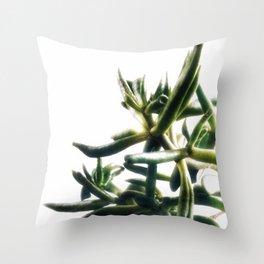 Jade - money plant - succulent in bright light Throw Pillow