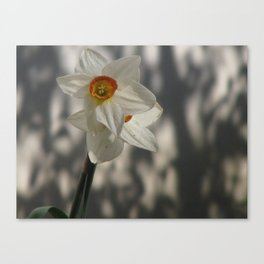 Flower in the Shadows Canvas Print