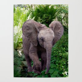 Elephant and Jungle Poster