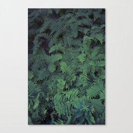Fern Leaf Pattern Canvas Print
