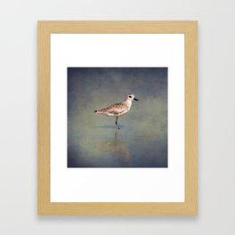 The Sanderling 2 Framed Art Print