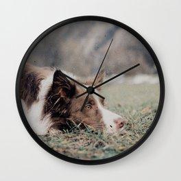 Kiva the dog Wall Clock