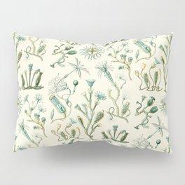 Ernst Haeckel - Scientific Illustration - Campanariae Pillow Sham