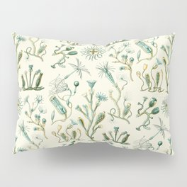 Ernst Haeckel - Scientific Illustration - Campanariae Pillow Sham