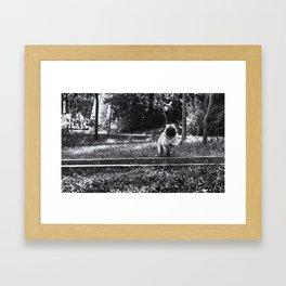 Running Pug Framed Art Print