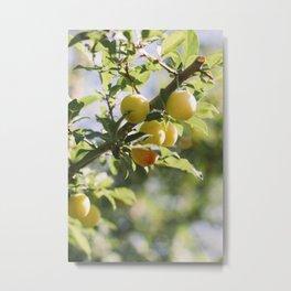 Apple Picking, I Metal Print