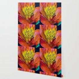 Single Alstroemeria Inca Flower-1 Wallpaper