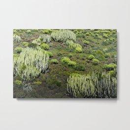 Cactus land Metal Print