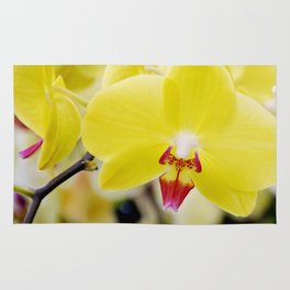 Close up Orchid #7 Rug