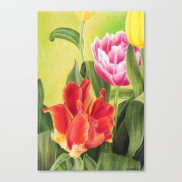 Tulips colored pencil illustration Canvas Print
