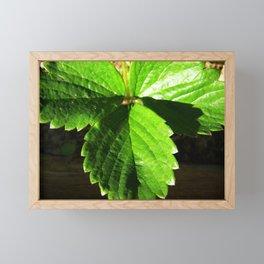 Strawberry leaves Framed Mini Art Print