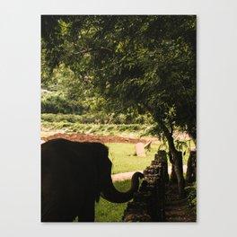 elephant nature park 1 Canvas Print