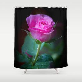 Wet Pink Rose Shower Curtain
