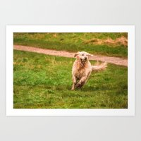 golden retriever Art Prints featuring Retriever by NCP Photography