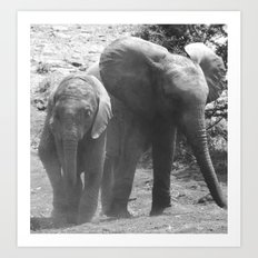 Young african elephants Art Print