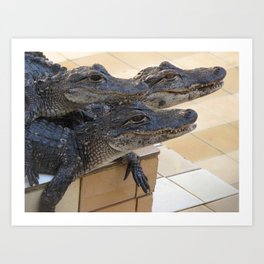 Baby Alligators Art Print