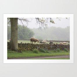 Sheep on Stone Wall Art Print