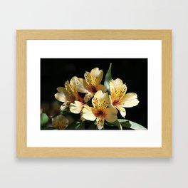 Gorgeous Yellow Blooms Framed Art Print