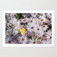 Colorado Wildflower #735 Art Print