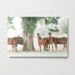 BLM Mustangs Metal Print